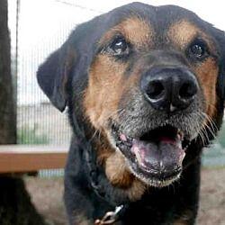 Pet Card Dog Adoption Coonhound Dogs