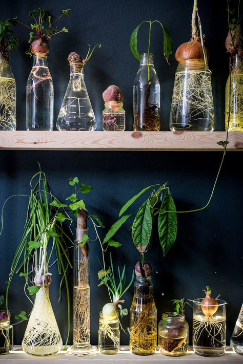 green campaign water campaign kickstarter campaign spruitje - April and mayApril and may, Indoor Garden, Garden Plants, Indoor Plants, Potager Garden, Garden Terrarium, Greenhouse Gardening, Terrariums, Water Garden, Vegetable Gardening