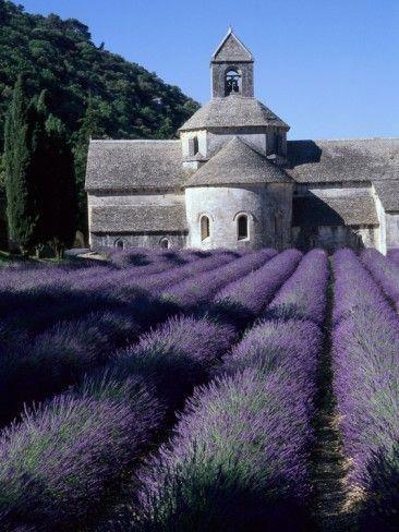 Beautiful Field Lavender Fields French Lavender Fields Provence