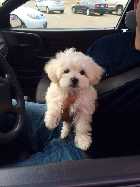Little guy came through the drive-thru today - Cutest Paw Cute Baby Dogs, Super Cute Puppies, Baby Animals Super Cute, Cute Little Puppies, Cute Dogs And Puppies, Cute Little Animals, Cute Funny Animals, Doggies, Baby Animals Pictures