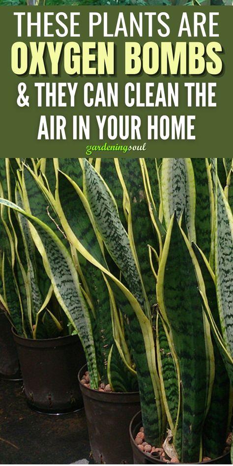 Best Indoor Plants, Outdoor Plants, Indoor Garden, Garden Plants, Outdoor Gardens, Household Plants, Hanging Herbs, Florida Gardening, Inside Plants