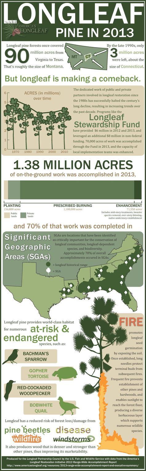 US Fish and Wildlife Serviceu0027s infographic on Longleaf - accomplishment report
