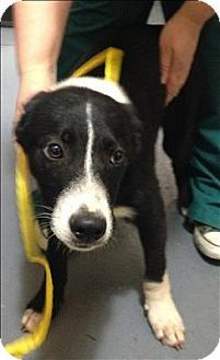 Border Collie Puppies For Sale In Virginia Zoe Fans Blog With