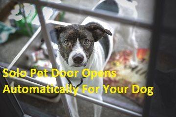 Wall Mount Pet Door The Magnetic Dog Door Your Dog Can Control