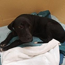 Available Pets At Gulf Coast Humane Society In Fort Myers Florida The Coolest Fort Myers Florida Humane Society Fort Myers
