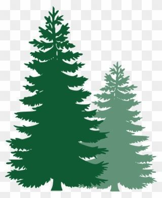 Pine Trees Spruce Trees Evergreen Trees Tree Spruce Pine Tree Vector Png C Evergreen Pine Png Spruce Tree Svg Tree Vector Png Black Christmas Trees