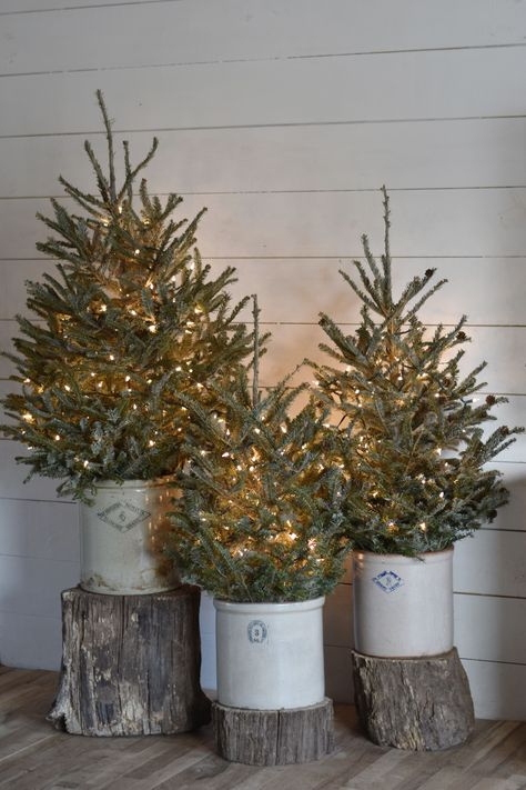 Rustic Christmas Trees in Old Crocks for that Farmhouse Country Primitive Decorating Style. Rustic Christmas Trees in Old Crocks for that Farmhouse Country Primitive Decorating Style. Country Christmas Trees, Christmas Porch, Farmhouse Christmas Decor, Winter Christmas, Holiday Decor, Christmas Cactus, Primitive Christmas Tree, Christmas 2019, Christmas Lights