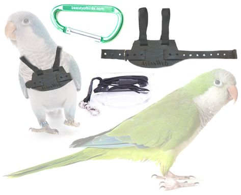 The Apollo medium wood bird parrot cage toy supply cockatoo mini macaw conure