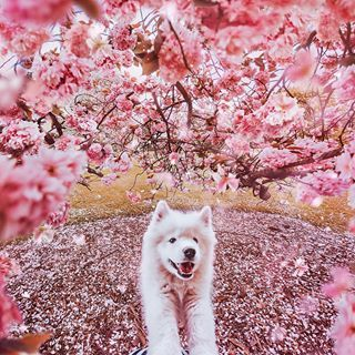 When You Sit Under A Cherry Tree And You Attacked By A Terrible Beast Kew Gardens London Beautiful Wolves Cute Animals Animals