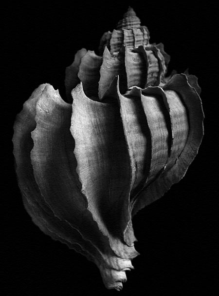 Mussels and Snails 1940 - late - Alfred Ehrhardt Organic Structure, Natural Structures, Natural Forms, Natural Wonders, Still Life Photography, Art Photography, Edward Weston, Patterns In Nature, Abstract Sculpture