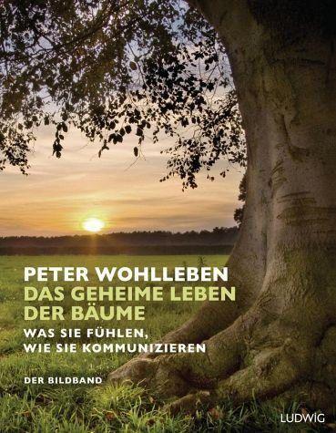 Gebundenes Buch Das Geheime Leben Der Baume In 2020 Peter