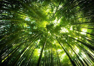 Fototapete Bambus Wald Vliestapete Tapete Fototapete Tapeten Wandtapete