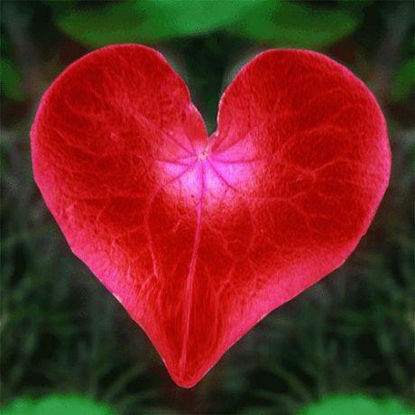 Гипертония сердца что это - НормаДавления