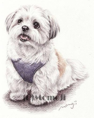 Pin By Katherine Pets On Shih Tzu Dog Paintings Dog Tattoos