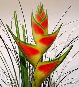 Najpiekniejsze Kwiaty Swiata Helikonia Plants Flowers Wedding