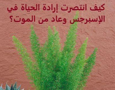سبحان الله لا شيئ يفوق إرادة الحياة بالنسبة للكائنات الحية ومن ضمنها النباتات الخضراء التي نعشقها الإسبرجس الناعم Asparagus من نباتات ال In 2020 Herbs Asparagus