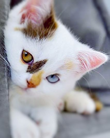 #funnykittens -  #funnykittens  - #CatsAndKittensart #CatsAndKittenscalico #CatsAndKittensdiy #CatsAndKittensdrawings #CatsAndKittensforsale #CatsAndKittenshumor #CatsAndKittenskitty #CatsAndKittenspictures #CatsAndKittensragdoll #funnykittens