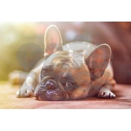 French Bulldog Pillow Cases CafePress
