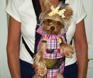 Front Carriers Would Love This For My Liitle Yorkie Yorkies