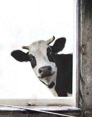 New 15 X15 Milk Cow Head Country Farm Vinyl Window Wall Art Decor Decal Wall Art Decor Tree Wall Art Vinyl Wall Art