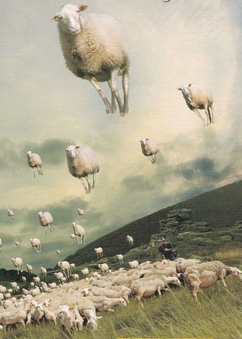 """Starting off a small section with sheep paintings/Illustrations This is by the wonderful artist Michael Sowa. His humorous pictures make me smile. Michael Sowa, Photomontage, Art Du Collage, Surrealist Collage, Sheep Art, Kunst Online, Surrealism Painting, Art And Illustration, Surreal Art"