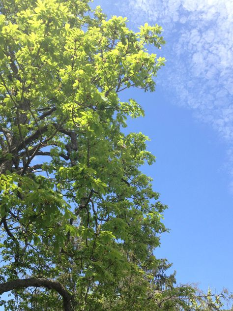 Bright green against the blue sky of Spring!