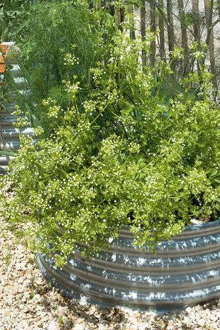 Rundes Hochbeet Von Manufactum Bild 8 In 2020 Hochbeet Gartengestaltung Pflanzen