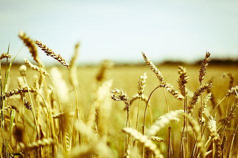 Fields full of joy
