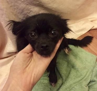 Hund K A Mischling Hundin 6 Jahre Rumanien Tiere Suchen Ein Zuhause Hunde Aus Rumanien Haustiere