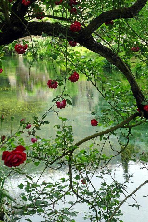 Ninfa Gardens, Province of Latina, Lazio region, Italy