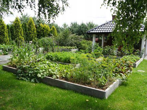 Warzywnik Betonowy Inspekt Skrzynka Na Warzywa 7288844284 Allegro Pl Eco Garden Vegetable Garden Garden