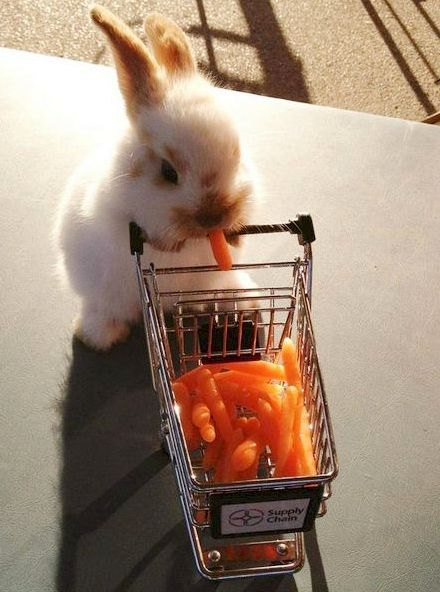 Cute little animals and other funny pictures Baby Animals Super Cute, Cute Baby Bunnies, Cute Little Animals, Cute Funny Animals, Cute Cats, Cutest Bunnies, Baby Farm Animals, Baby Cows, Baby Ducks