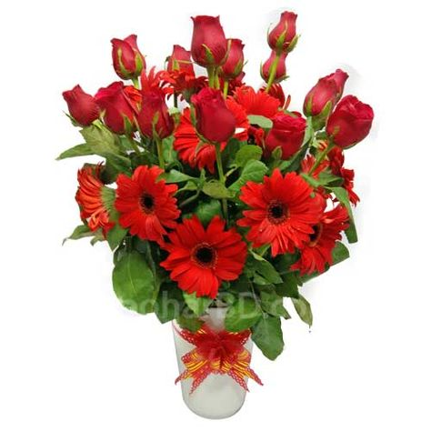 Red Surprise Send Red Rose And Gerbera Gift To Your Love Mother Father Mother On Mother S Day Father S Day Valentine S Day Red Roses Flowers Gerbera