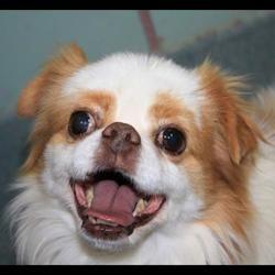 Pin By Terry Gorman On Please Take Us Home Pet Adoption