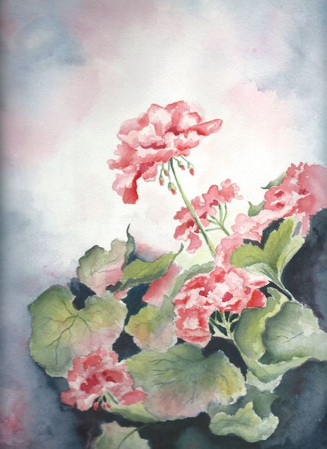 Aceo Geraniums Watercolor Painting Print On Cardstock