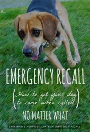 Dog Training Kikopup Bob Minchella Dog Training Rochester Ny