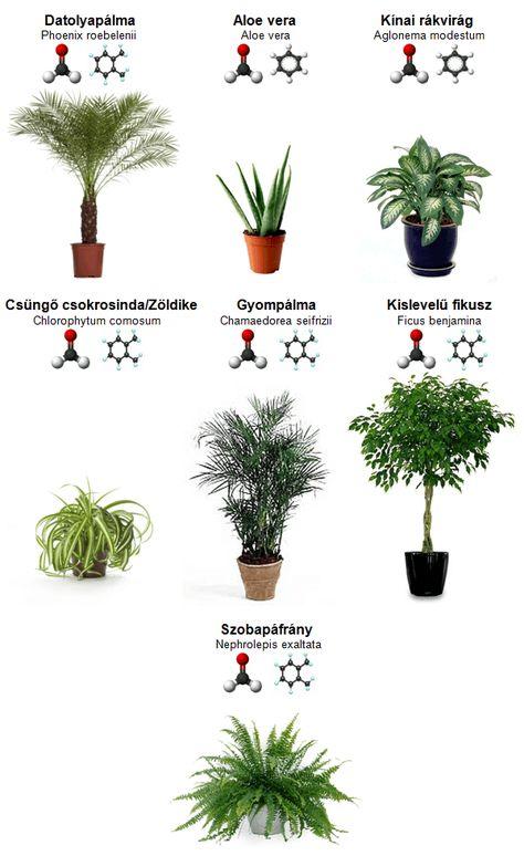 17 legnépszerűbb szobanövény