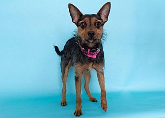 Columbus Ga Terrier Unknown Type Small Young Female Small 25 Lbs 11 Kg Or Less Animal Ark Rescue Columbus Gafind A Pet To Adopt With Images Pets Dog Cat Terrier