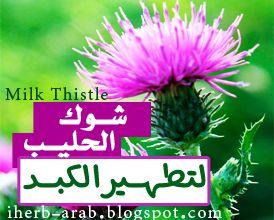 فوائد حليب الشوك Iherb Milk Thistle Plants