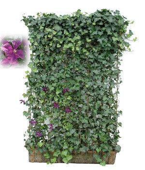 Pin Auf Gartenblumen