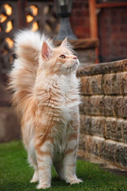Spectacular Beautiful Cats For Sale In Karachi Cool Pretty Cats Pets Beautiful Cats