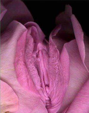 God Created Strange Flowers Look Like Vagina | Funky Downtown