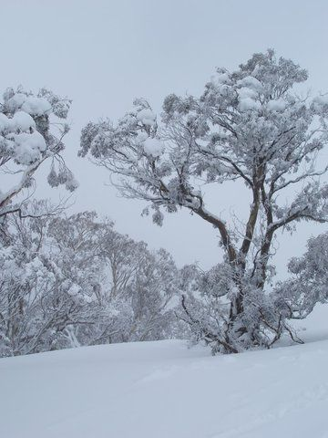 Winter Gif By Bp0047 Photobucket Snowy Pictures Winter Photos