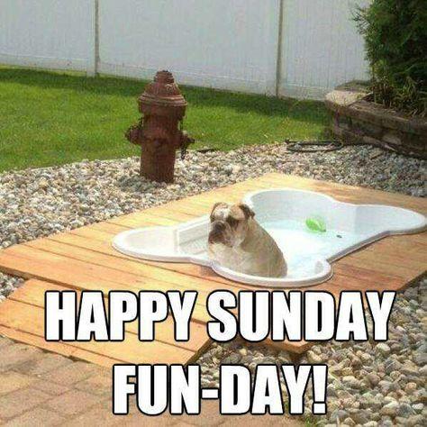 Doggie Bath With Images Dog Playground Dog Pool Diy Dog Stuff