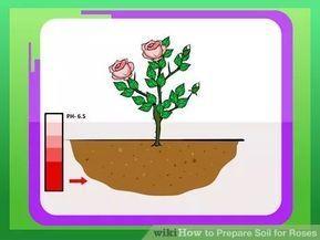 Prepare Soil For Roses Garden Soil Planting Roses Starting