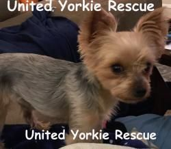 Adopt Dexter On Baby Rottweiler Baby Yorkie Dogs