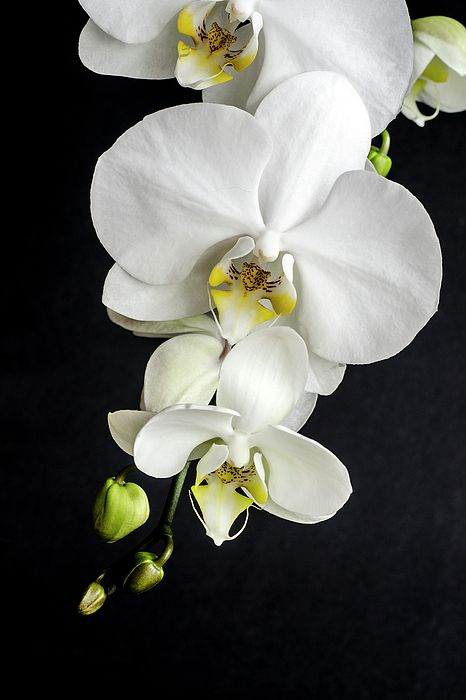 Orchids Flowers Orchids Painting Orchid Wallpaper Orchid Photography