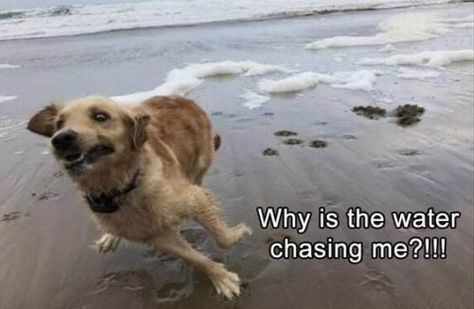 31 Most Funny Animals Memes