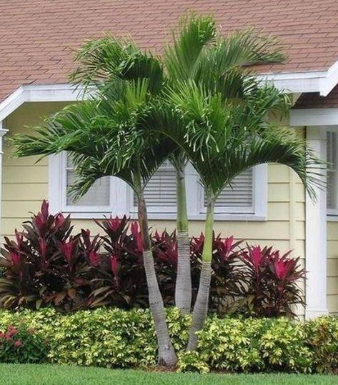 52 Super Ideas Palm Tree Garden Ideas Front Yards Landscape