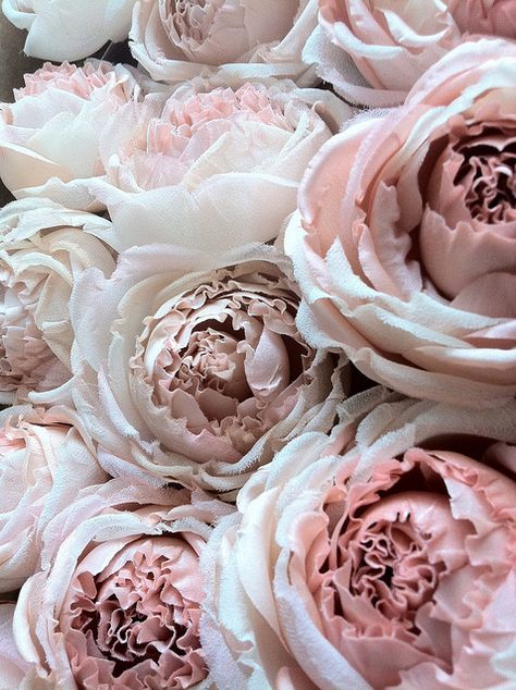 peonies (in cloth?)